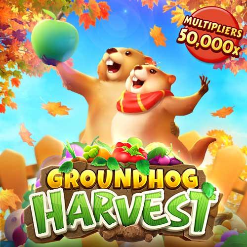 Banner Groundhog Harvest เกมสล็อตทุกค่าย ทดลองเล่นสล็อต PG ฟรี