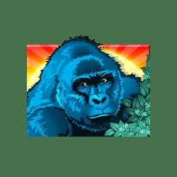 Top2-Congo-Cash-min