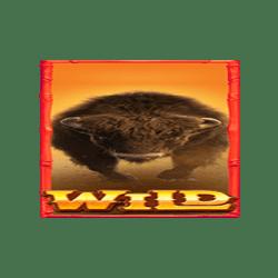 Wild-Buffalo-Win-min